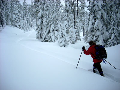 snow shoing on Yellowjacket trail, near WhiteAWay trail