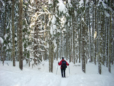 snowshoeing Pacific Crest trail