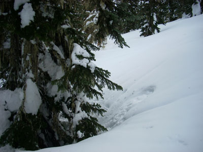 Tree wells in the snow
